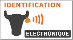 icn-identification-electronique.png